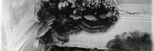 Что такое домовой гриб и как с ним бороться?